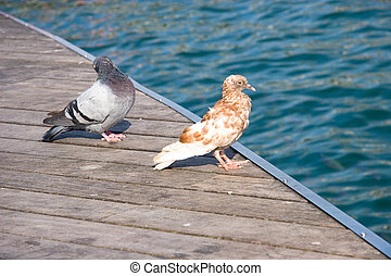 Doves at the pier