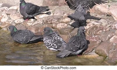 Doves by the water on a hot summer day