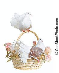 Doves on a basket