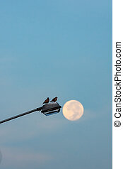 Doves on a street lamp A morning with the background of a full moon