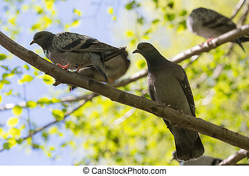doves on a tree branch
