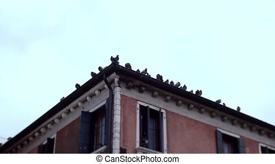 Doves on the roof of a building