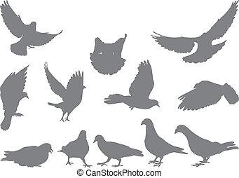 Doves vector silhouettes bird