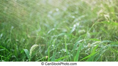 Downpour backlit, grass covered with drops of water closeup