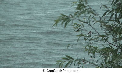 Branch of a willow against waves of lake during a rain, focus on a branch.