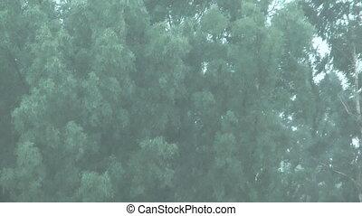 Downpour. - HD 1080 shot of summer downpour.