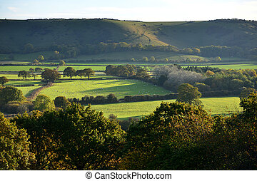 Downs - South downs and english countryside with hedgerows