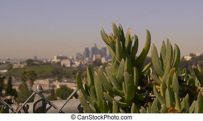 Downtown Los Angeles California seen from a cactus dolly...
