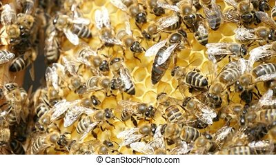 Dozens of bees crawl on the beecomb hexagons with honey and ...