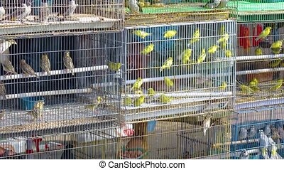 Dozens of caged finches and other colorful birds, displayed for sale in a typical pet shop in Southeast Asia. Video UltraHD