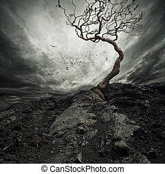drámai ég, felett, öreg, elhagyott, fa.