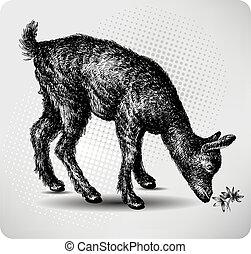dra, 小さい, goat, 牧草地, 手