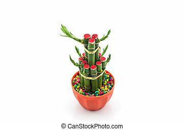 dracaena, kiełek, drzewo, młody, grown-up., wstążka