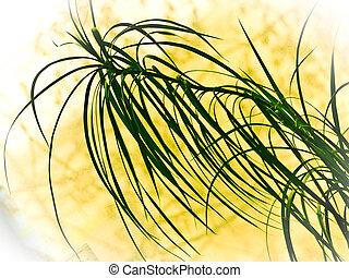 dracaena - tropical plant