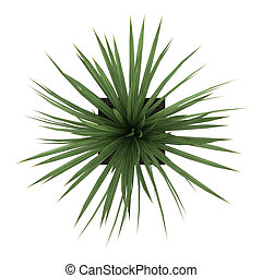 Dracena houseplant in a tall container - Dracena houseplant...