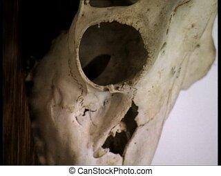 DRACULA CASTLE deer skulls zoom