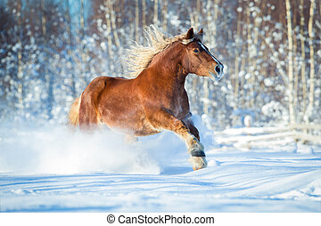 Draft horse gallops in winter