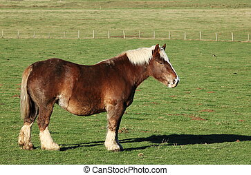 Draft Horse Profile - A draft horse stands in profile in a...
