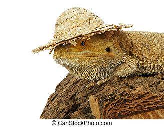 dragon, chapeau, barbu