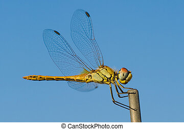 Macro dragonfly in the mountains, with blurred background