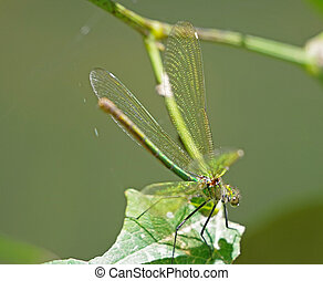 dragon-fly sits on a tree