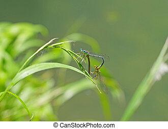 dragon-flys sits on a tree