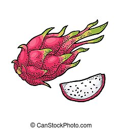 Dragon fruit whole and slice. Vector vintage engraving color