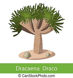 Dragon tree on a white background