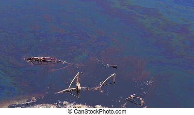 Dragonflies fly over the oil spill and dead plants, pond, water