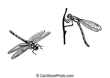 dragonfly., 線画
