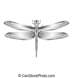Dragonfly. 3d style vector illustration for print tatto t-shirt.