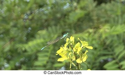 dragonfly at rest.