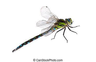 dragonfly close up isolated on white