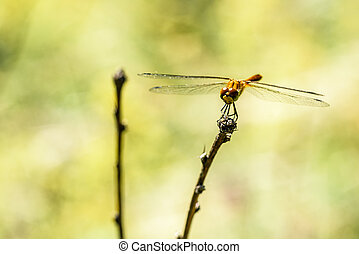 Dragonfly close-up on a branch