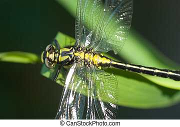 dragonfly close up on green plant