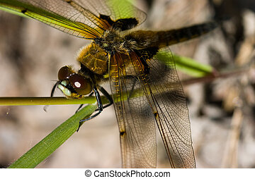 Dragonfly close up on green grass in summer