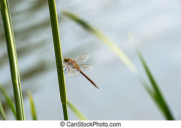 Dragonfly  close up sitting on the grass