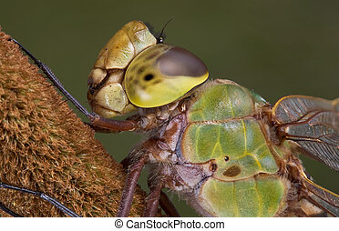 Dragonfly close up - a dragonfly is shown in an extreme...