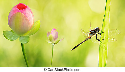Dragonfly close up with water lily flowers - Dragonfly close...