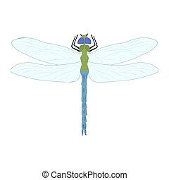 Dragonfly color illustration isolated on white background.