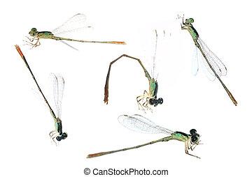 Dragonfly damselfly