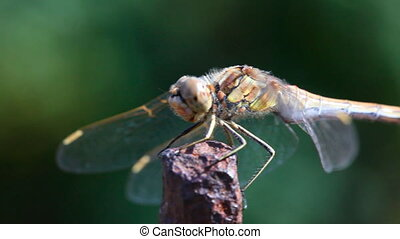 Dragonfly. - Dragonfly on a metal rod.