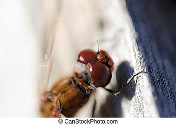 Dragonfly Eye Detail