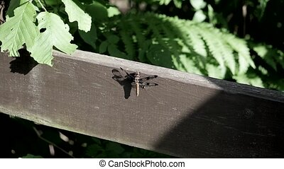 Dragonfly flies away after being touched by a shadow.