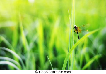 Dragonfly Illuminated By The Sun on grass
