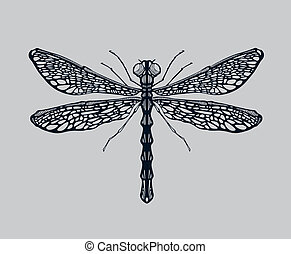 Dragonfly illustration, hand drawn and then digitally traced