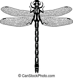Dragonfly illustration
