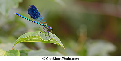 dragonfly in forest