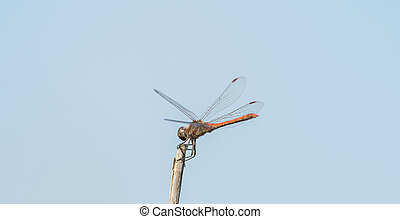 Dragonfly in the wild on a branch