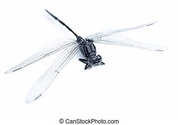 Dragonfly macro on white